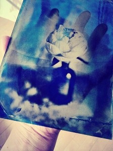 blue peony