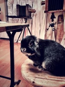 bun and camera