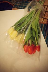 y-o-tulips