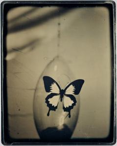 m-dag-butterfly-1122-2016